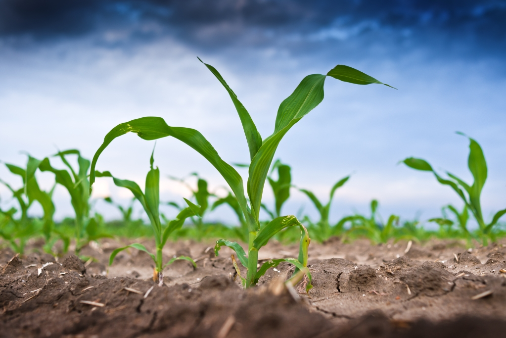 El medio rural: un nuevo escenario para el emprendimiento innovador