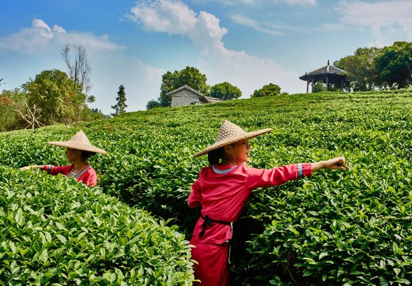 La revolución rural llega a China gracias al comercio electrónico