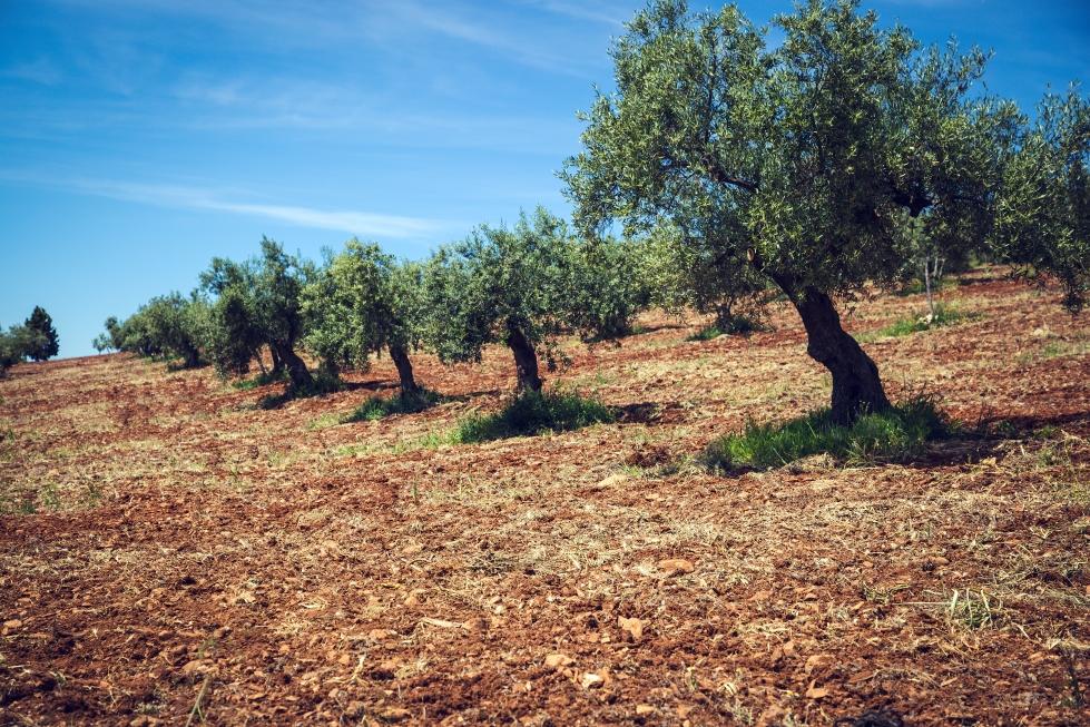 El sector agrario: de la subvención a la innovación