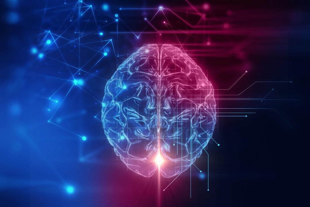 La directa asociación entre la personalidad y la morfología del cerebro