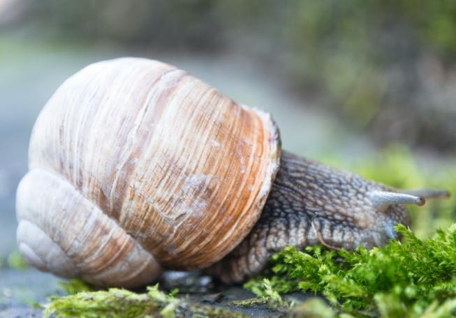 Granjas de caracoles - innovación