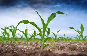 Medio rural como escenario del emprendimiento innovador