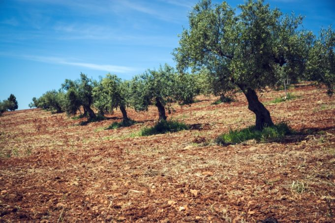 innovacion agroalimentacion.1