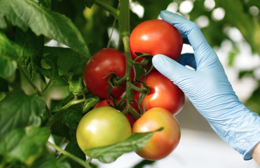 Se patenta en España un sistema que aumenta la vida de los alimentos