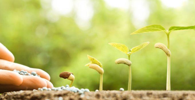 semillas y plantas amazon