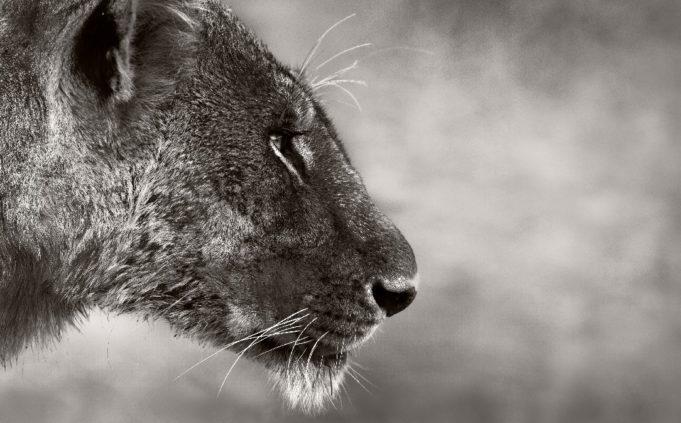 Convertirse en líder aprendiendo de la conducta animal