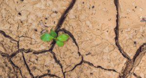 El CSIC lidera un proyecto para cultivar plantas en el espacio