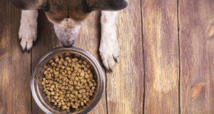 comida para perros