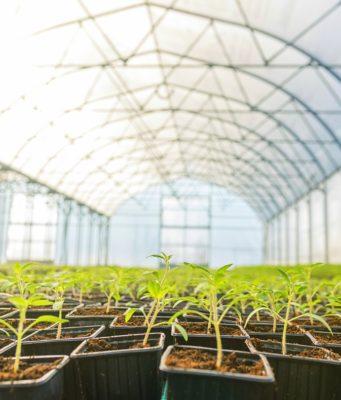 tecnología sector alimentario